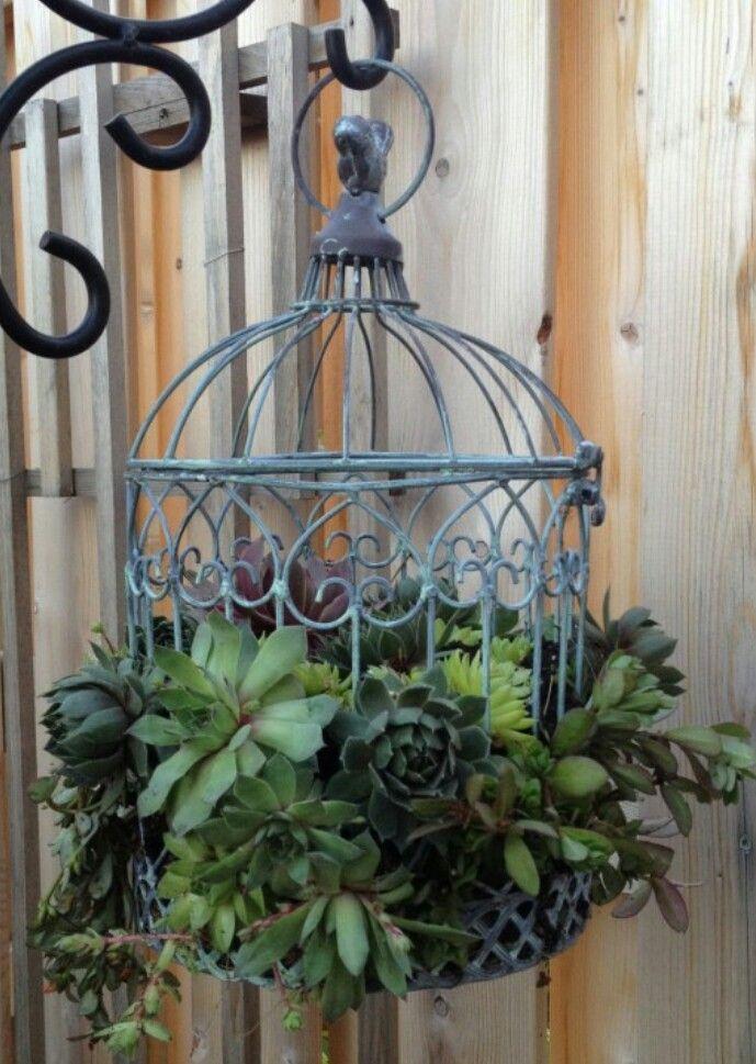Hanging succulents