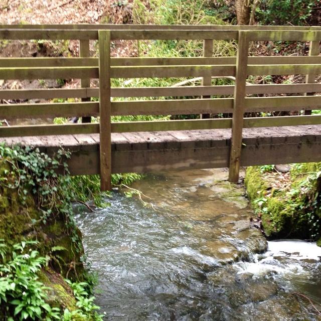 The stream in JenkelfieldFavorite Places, Bubbles Stream, Forests Schools, Barnard Castles, Nature Beautiful, Castles Wood