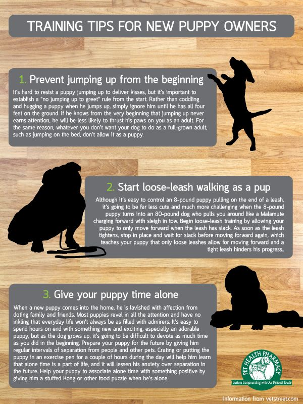 Epic 45+ Puppy Training Tips https://meowlogy.com/2017/03/26/45-puppy-training-tips/ Puppies need naps the same as babies. Quite a few of our past puppies have created wonderful service and therapy dogs too. Possessing a new puppy is a rather intriguing and enjoyable experience for the entire family, therefore do not neglect to take pleasure in the companionship of your new pet. You may now receive a new puppy without all those new puppy difficulties.