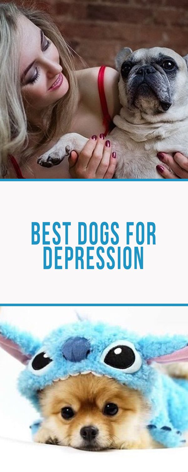 All you need to know about ideal breeds for service and therapy  #bulldogs #costumes #outfits # animals #pets #dogs #frenchies #tips #funny #puppies #depression #therapy