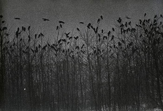 Nayoro, 1976, from The Solitude of Ravens, b | Flickr - Photo Sharing!