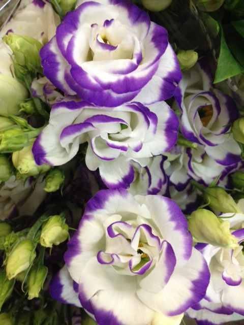 Lisianthus 'Excalibur blue'. Sold in bunches of 10 stems from the Flowermonger the wholesale floral home delivery service.