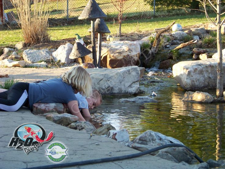 1000 images about pond fish pond life photos on for Koi pond builders near me