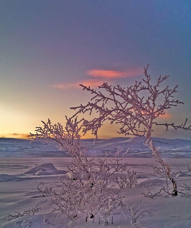 Finnish Winter day by Cornelia  on 500px Taken in Kilpisjärvi, North Finland close to the Finnish/Norwegian border.
