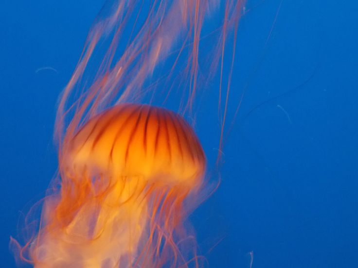 Jellyfish - Underwater World
