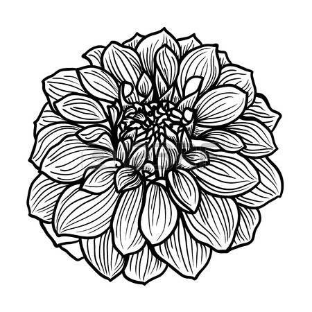 best 20+ fleur noir et blanc ideas on pinterest | photographie de