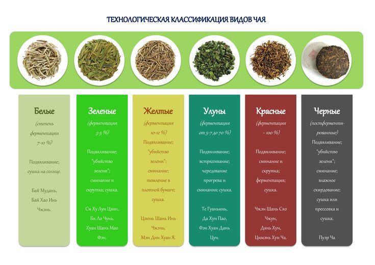 Технологическая классификация видов чая - TeaTerra | TeaTerra