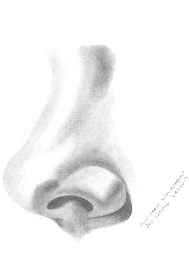 How To Draw Noses  How To Learn To Draw And Paint Portraits Harry Fredman  Method