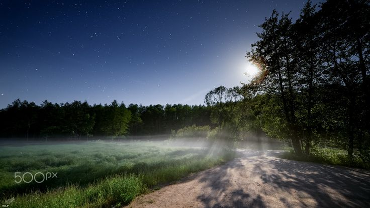 Białowieża in foggy moonlight - Moonlight, fog and forest