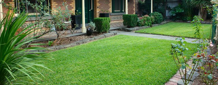 Sir Walter Buffalo Turf in Melbourne If you are looking to buy Sir Walter Buffalo Turf in Melbourne then Anco Turf is the right place for you. Call 1800 010 110 to know more.