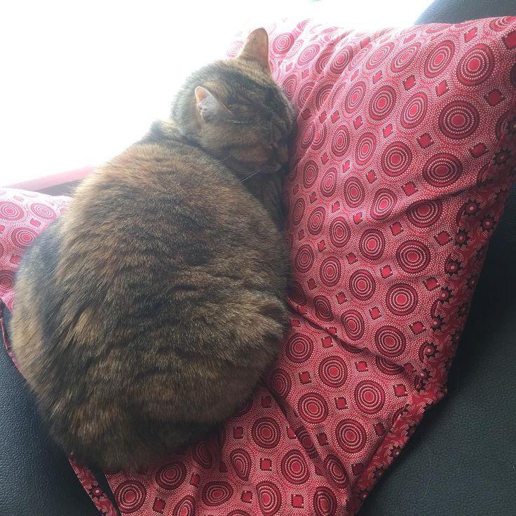 I so do love my cushion. Thanks Mom