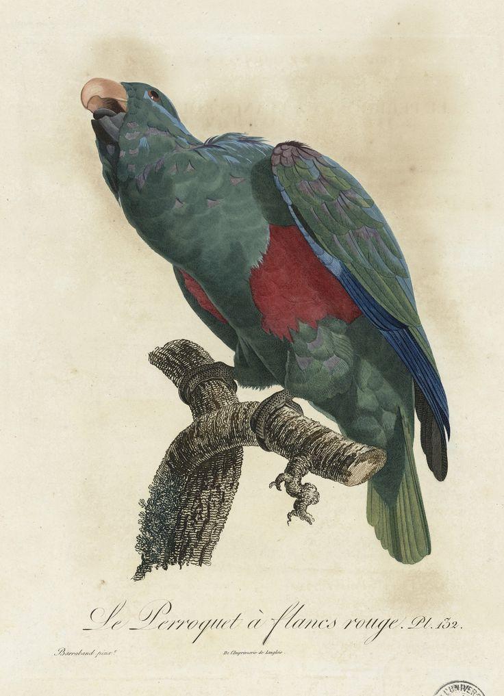 les 372 meilleures images du tableau perroquets et autres oiseaux sur pinterest aquarelle. Black Bedroom Furniture Sets. Home Design Ideas