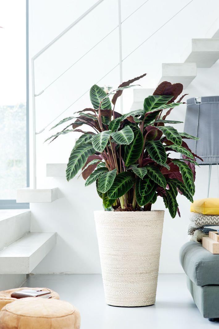 5 Pflanzen, die hervorragend ohne Sonne auskommen