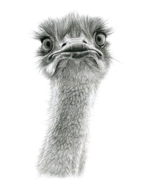 Cute Ostrich by sschukina on deviantART