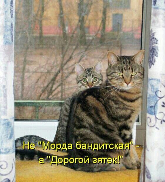 картинки про мартовских котов с юмором приложения также может