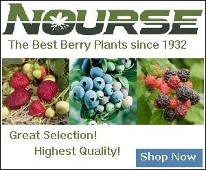 Recommended strawberry varieties by state. Find which strawberry plant variety you should plant in each of the United States. Check for sale page to buy.