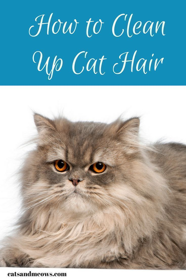 how to get rid of cat hair on clothes