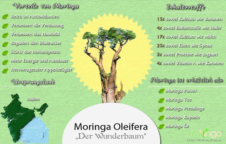"""Der Moringa Baum wird auch als """"Wunderbaum"""" bezeichnet. Warum erfährst du hier! ;-) #Moringa #vitalingo #Gesundheit http://www.vitalingo.com/news/lexikon/was-ist-moringa/moringa-inhaltsstoffebestandteile/"""