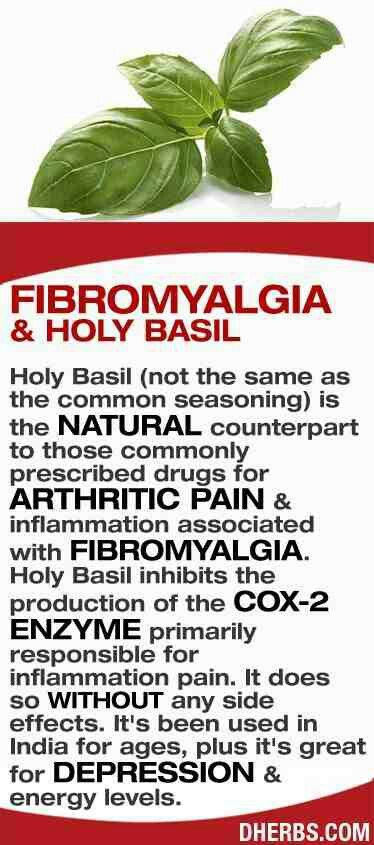 Holy Basil is good for fibromyalgia and especially inflammation. Perfect for it. Also, good to bathe with it as well relieve inflammation and aches.