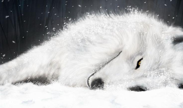 雪の白いオオカミ