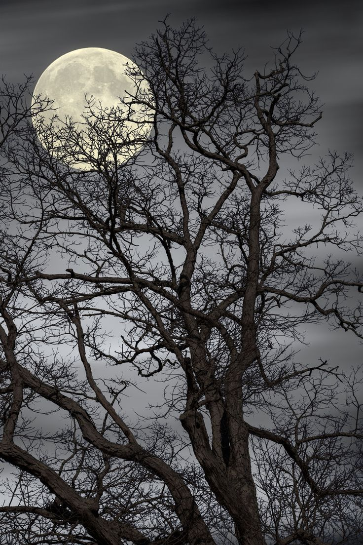 Photograph Treetop Moon by Gene Linzy on 500px