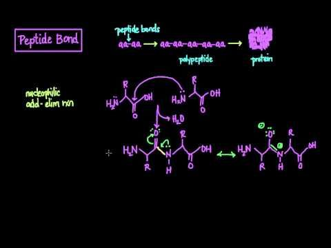 ▶ The Peptide Bond: Formation and Cleavage - YouTube