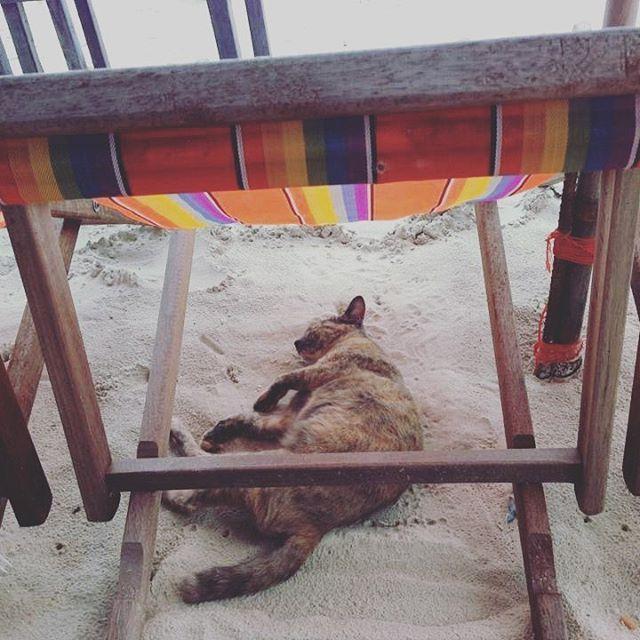 【another_sky_love_live_laugh】さんのInstagramをピンしています。 《ただちょこっと不器用。  とゆうかかなり不器用。  努力でなんとかしてきた派。  猫みたいに上手に甘えれたらうまくいくのにねー笑  Awkward is my specialty.  #大阪 #堺 #浜辺カフェ #ドライブ #海 #sea #beach #ブルークラッシュ #空 #夏 #日焼け #小麦色 #太陽 #happy #life #lifeisgood  #lifestyle  #プライベート #海が好きな人と繋がりたい #夏が好きな人と繋がりたい #夏島 #笑顔 #Smile #gopro #ほしい#日本#貝殻 #ウェディング #旅行 #タイ》