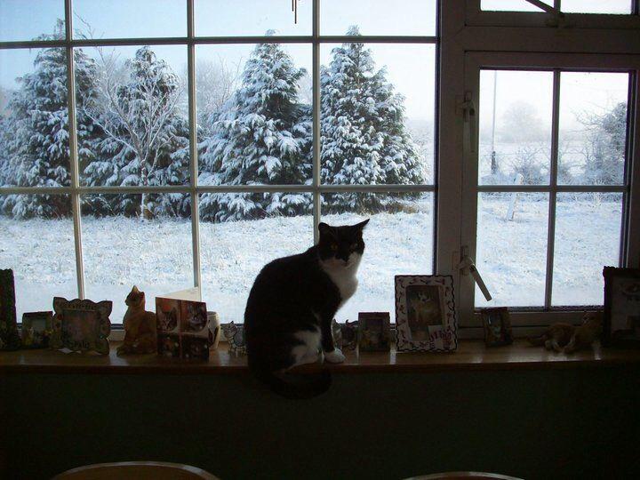 Kitty at Christmas