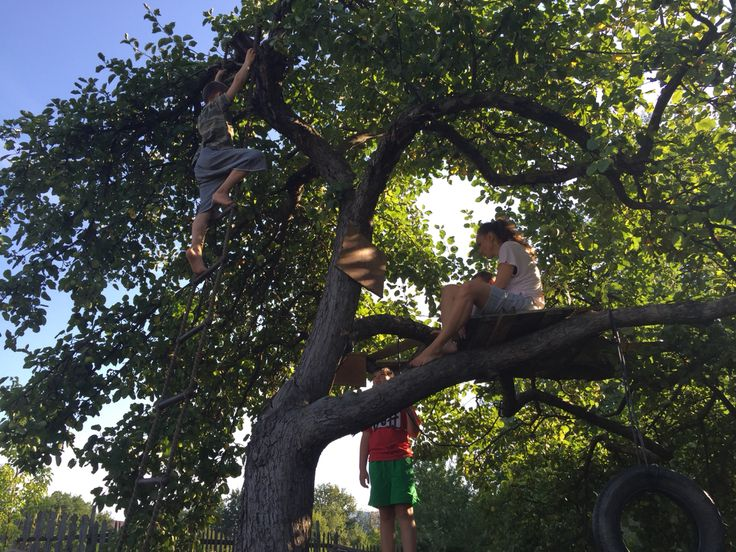 I've done my job: teaching my kids to climb trees. Fun for free. Checked.  Be the person you want to meet/spend time with/do business with.  #adventure in the #nature and #fun to #zing instantly.