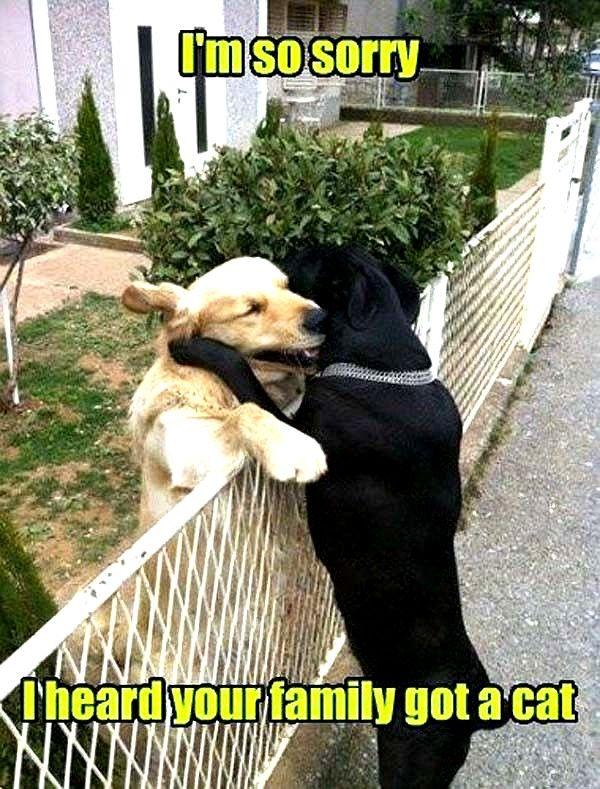 Insane Hilarious Dog Memes Dog Meme Reddit Cute Funny Dogs Funny Dog Memes Funny Dog Pictures