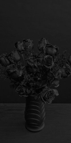 Black Roses are so beautiful.