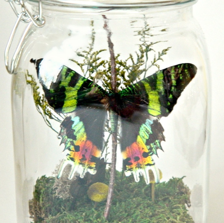 Butterfly Terrarium Kit Glass Display With Real Butterfly Home Decor Specimen Collection