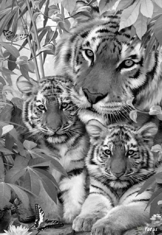 Die Besten 25 Ausmalbilder Tiger Ideen Auf Pinterest