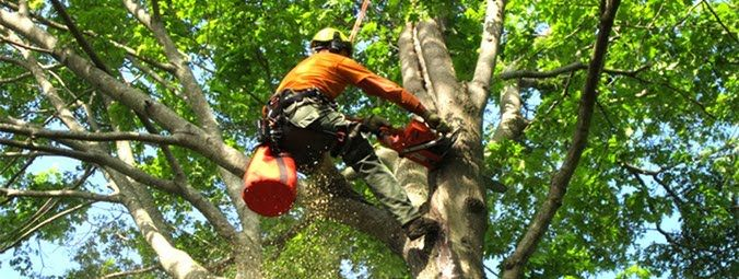Genesis tree service has many techniques to maintain your garden like heaven. So…