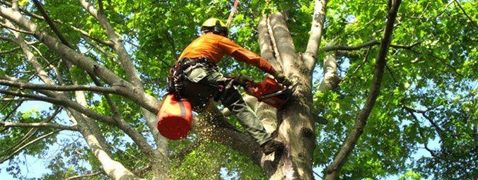 http://fbrg.genesistreeservice.net/