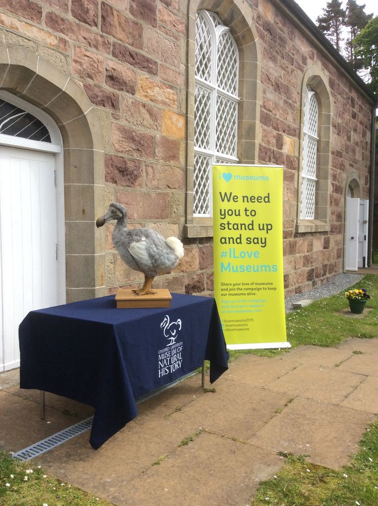 Our star object, grade A1 listed Thomas Telford church building, with the dodo, and the campaign banner #ilovemuseums