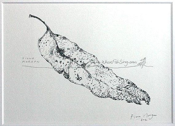WhereFishSing.com Fiona Morgan, pen drawing 'Meditative Study' #WhereFishSing GUMLEAF Matted Nature illustration ORIGINAL Botanical Drawing, Black & White, pen & ink, zen, mindfulness