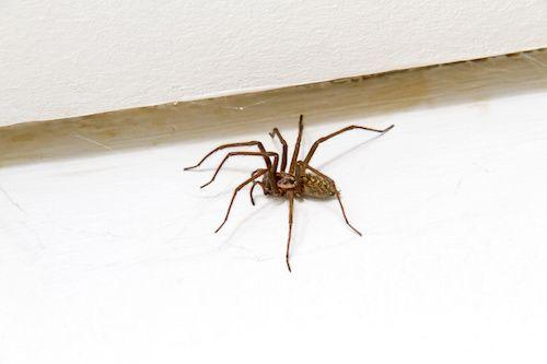 Vous avez peur des araignées ? Ou vous avez tout simplement envie qu'elles s'éloignent de votre maison ? Il existe des solutions efficaces contre les araignées. Optez pour des répulsifs naturels avec ces 7 astuces de grand-mère.