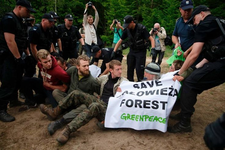 Environmentalists are fighting to prevent logging in Bialowieza forest, a Unesco world heritage site, but the Polish government has dismissed their concerns.