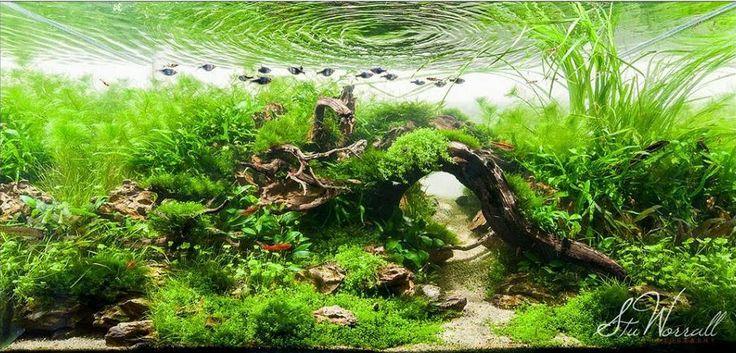 17 best images about ideas for our aquarium on pinterest for Fish aquarium garden