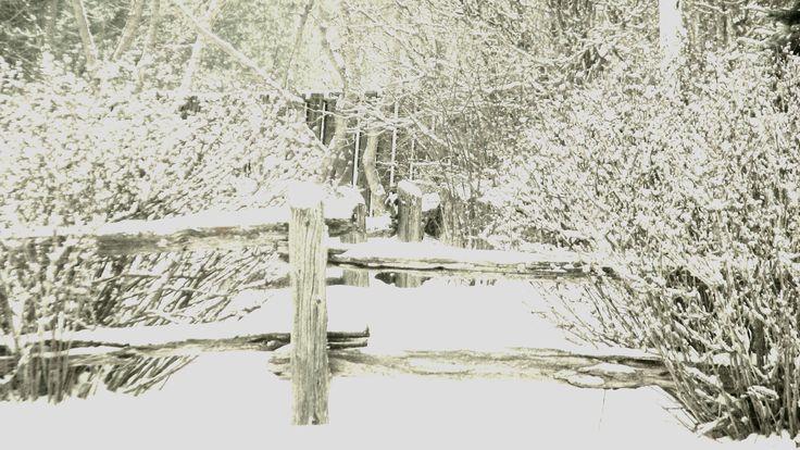 Fresh Fall of snow