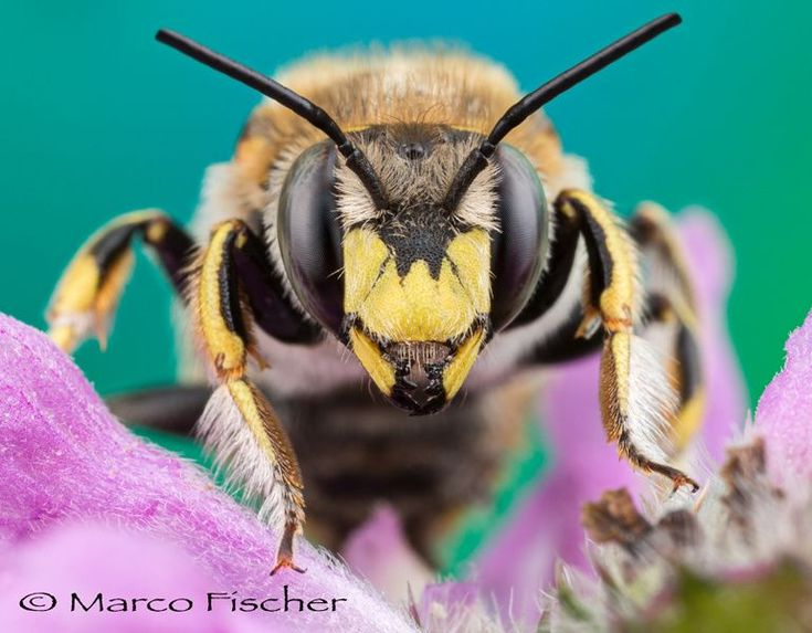 Bee Face by Marco Fischer on 500px