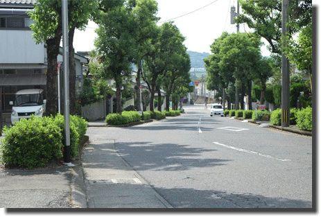 「街路樹 カーブ」の画像検索結果
