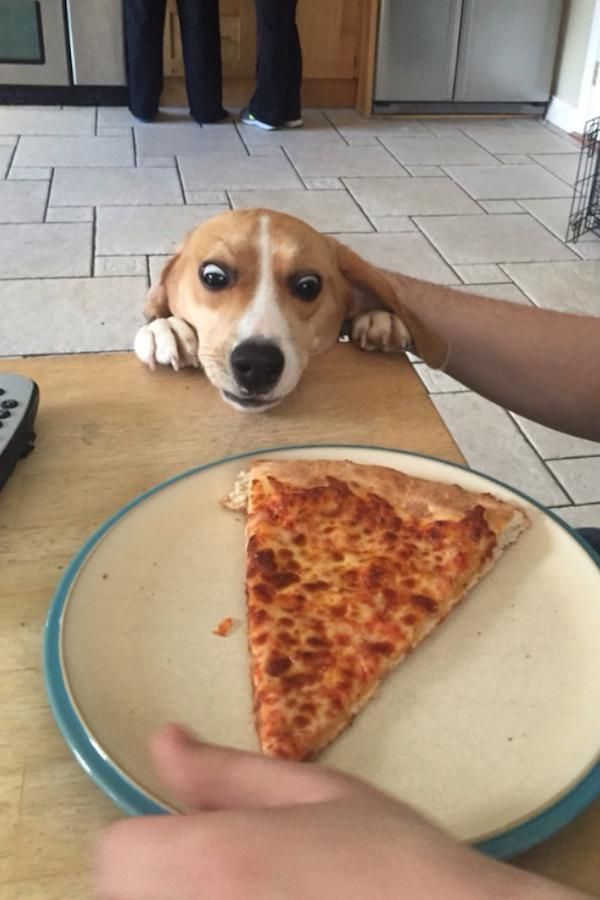 Delicious Foods Everywhere – the dog certainly thinks so!