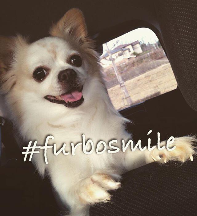 笑顔がキュート❤️なレオちゃんママ@kl.hikarix  から頂いたバトンを回させて頂きます✨  #furbosmile バトン🙋💕 アメリカのハリケーン被害救済キャンペーン🇺🇸🐶 キャプションに #furbosmile の記載と、スマイル写真に友達2名以上をタグ付け✨  1postに1$寄付されるそうです!✨ 9/19 23:59の期限つきです😳💦 タグ付けさせて頂きます✨スルーでも🆗🙆 もしお時間があれば回して頂けると嬉しいです❤️ 一匹でも多くのわんちゃんが笑顔になれますように🙏✨ お願いします❤️ #きなこ#笑顔#smile#幸せ#happy#一匹でも多くの#わんちゃん#助けたい#チワワ#チワワらぶ#ロンチー#ロングコートチワワ#Chihuahua#dog#愛犬#ペット#親バカ#犬好きな人と繋がりたい#犬好き#cute#love#癒し#犬なしでは生きていけません会#わんこ#癒しわんこ#犬#愛犬家