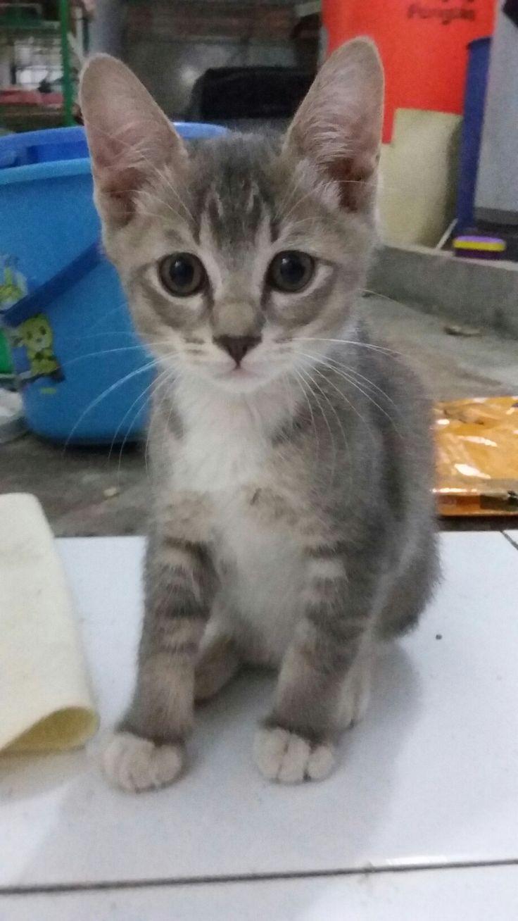 What??  #cat #catboy #cutecatboy #kitty #lovelycat #handsomecat #straycat #like #lovecat #maniaccat #ilovecat #live #ushi