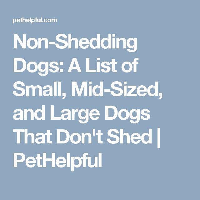 best 25 non shedding dogs medium ideas on pinterest medium size dogs medium dog breeds and. Black Bedroom Furniture Sets. Home Design Ideas