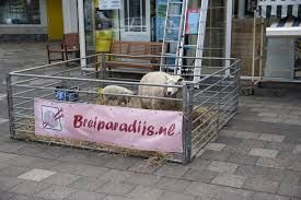 Breiparadijs - Leeuwarden  http://www.bureauvossen.nl/wolwinkels/