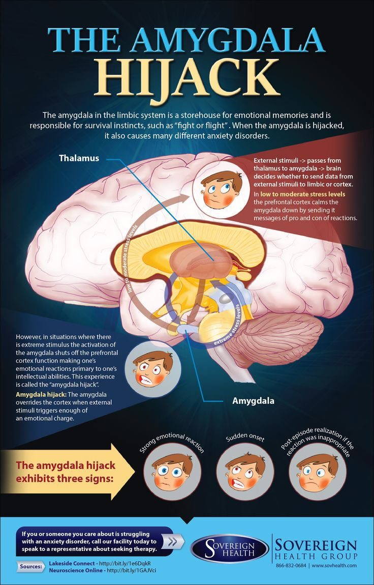 """The Amygdala Hijack"" www.sovhealth.com … Facts, truths, infographics and hacks about the psychology and neuroscience of success, the brain, personality and love. These tools work well with success, motivation and inspirational quotes. For more great inspiration follow us at 1StrongWoman."