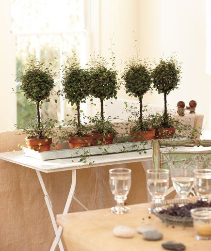 Best decorate with plants images on pinterest home